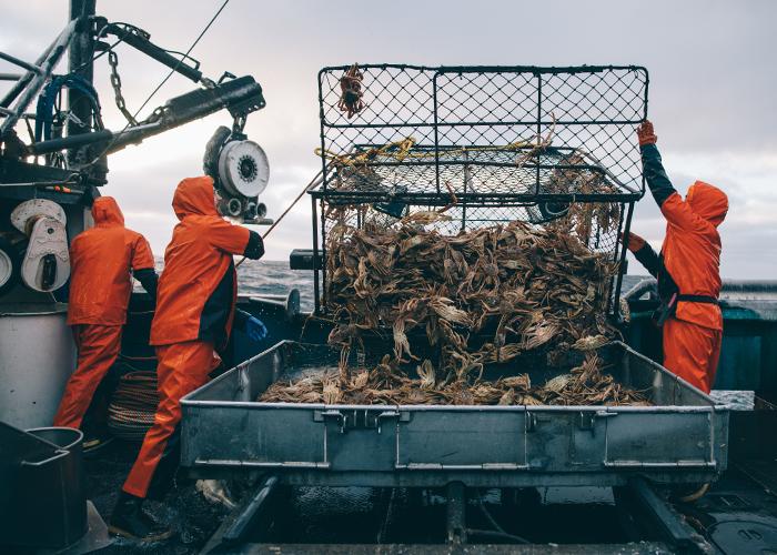 Crew empties a raised crab pot.