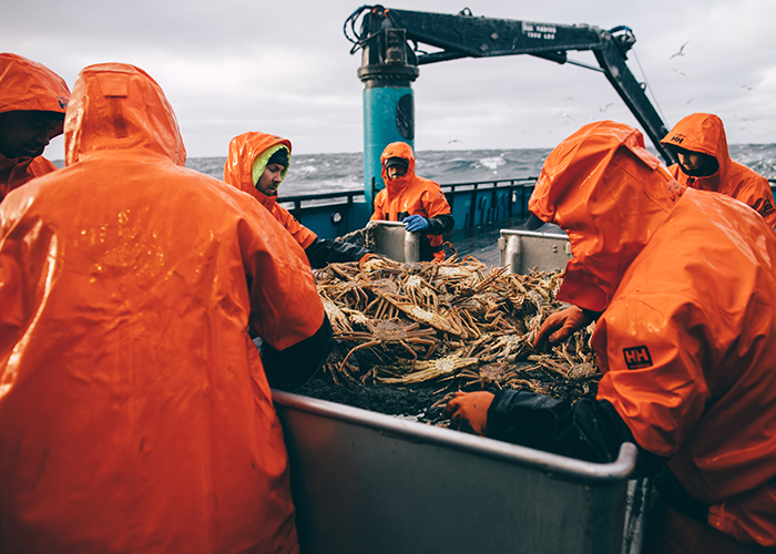 The crew sorts and receives the load from the crab pot.